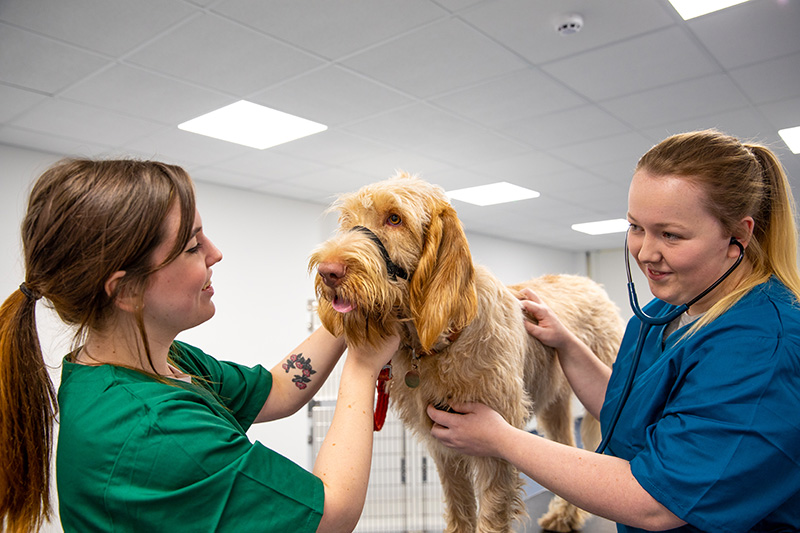 students with dog in the clinical suite
