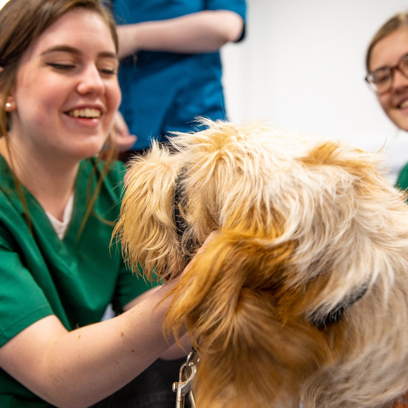 A veterinary nursing student is smiling and petting a brown dog
